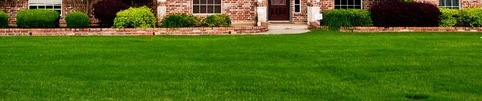 Dark green yard from fertilizing in Tyler, TX.